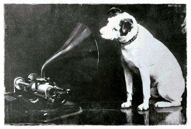 Dog103